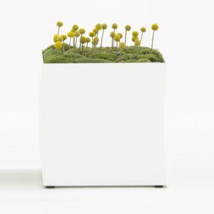 Bastalpe POT plantenbak 1