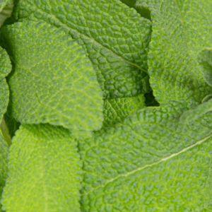 Plantui plantcapsules - Thaïse basilicum