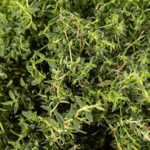 Plantui plantcapsules - Tijm